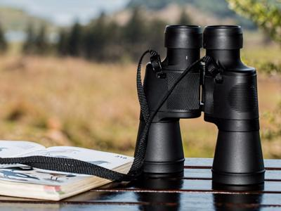 What to see in Elba Island: Birdwatching at Campo Rapaci
