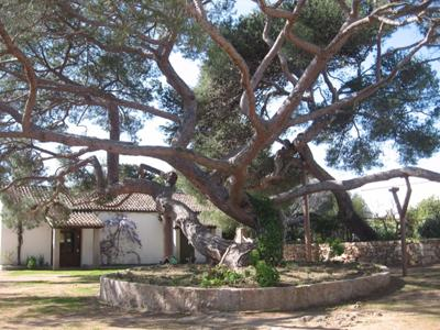 Go and see the Italian hero Garibaldi's house: what to do in Gallura, Sardinia