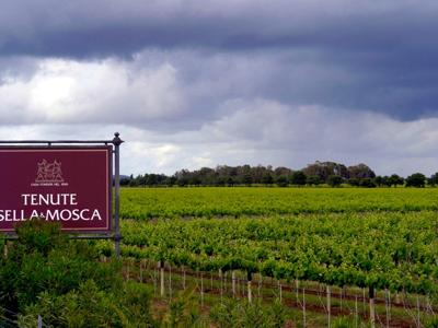 What to do in Alghero: Visit the Sella & Mosca winery