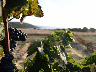 What to do in Sardinia: Enjoy a wine tour